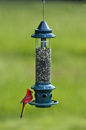 Brome Squirrel Buster Plus Cardinal