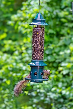 Brome squirrel buster plus with a squirrel trying to get some seeds