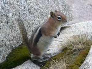 What do ground squirrels eat - How do you keep squirrels out of your garden ...