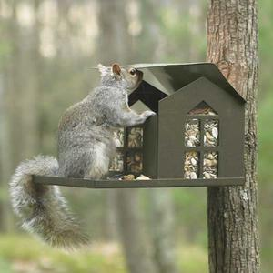 Erva Bird Proof Squirrel Feeder