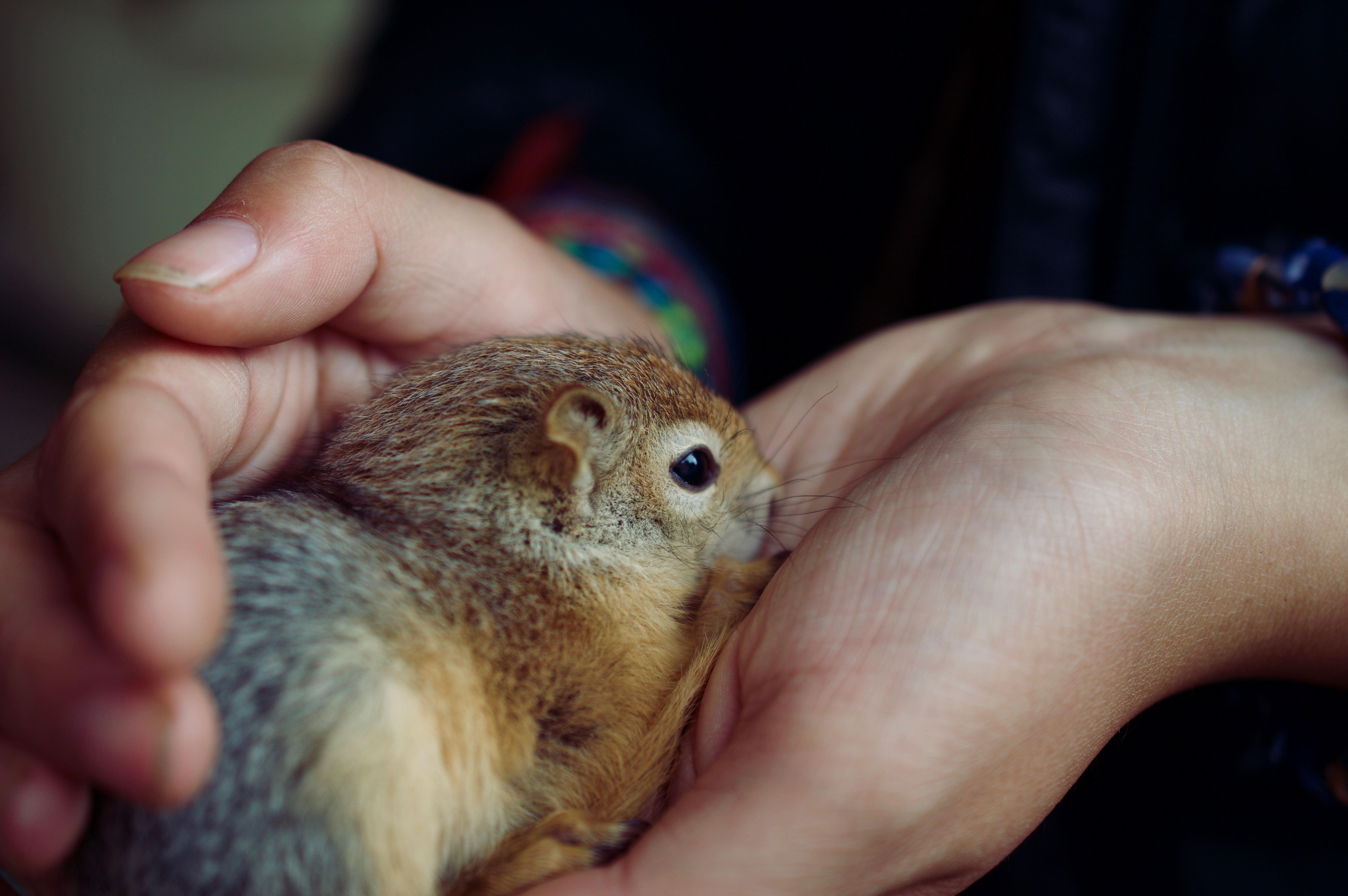 can you keep a squirrel as a pet whatdosquirrelseat org
