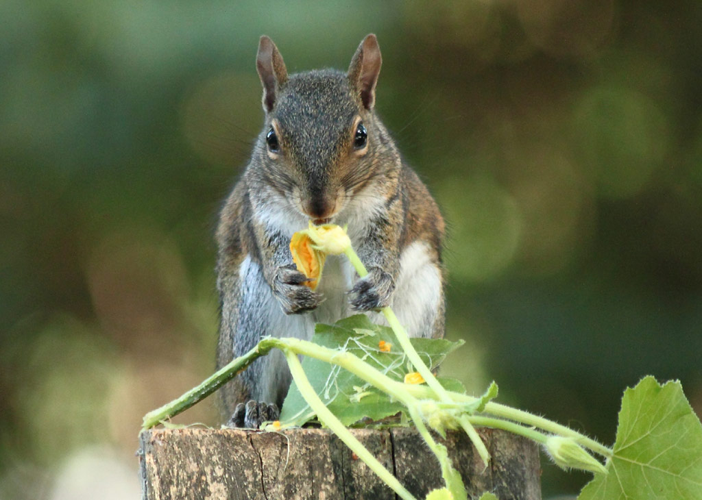 What Do Squirrels Eat Our Furry